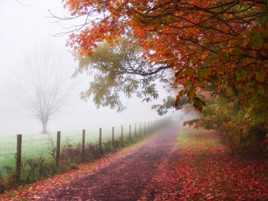 Misty Autumn Morning Trees