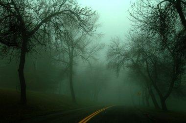 Misty Moody Autumn Morning