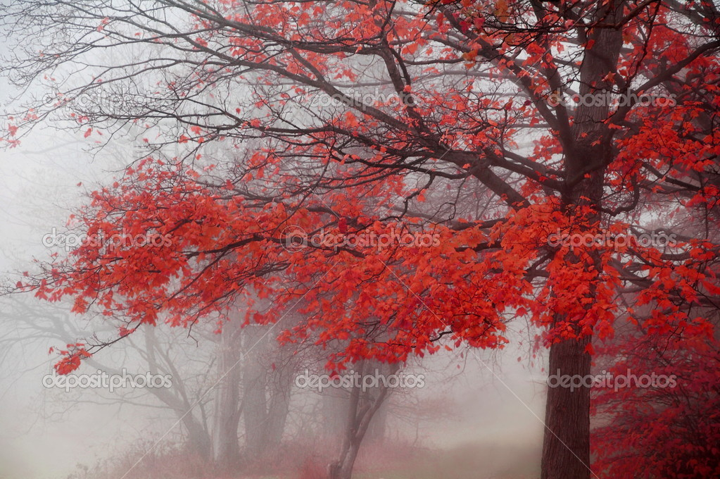 Misty Autumn Morning Trees