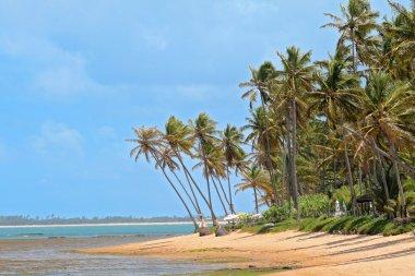 Deserted Beach in Brazil