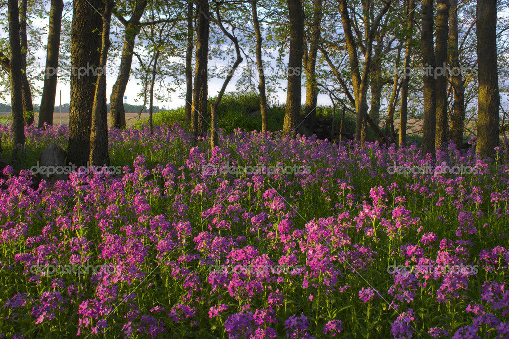 fleurs sauvages et la forêt — photo #2321494