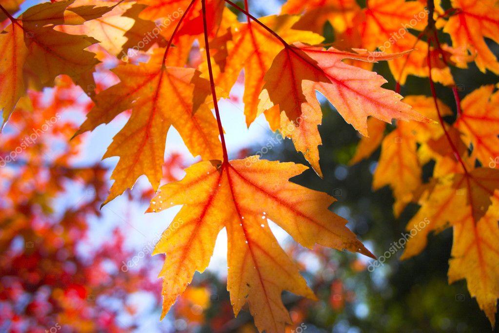 fall background stock photo georgeburba 2365783