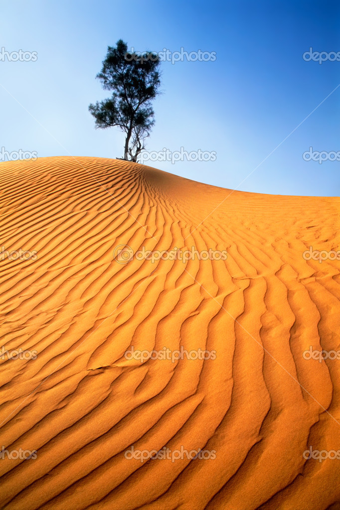 Lonely tree in sandy desert.