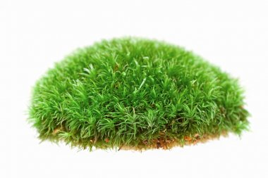 Close up of moss on white background