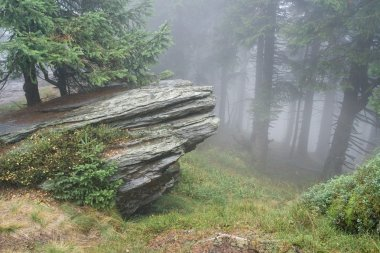 Rock and mist in forest