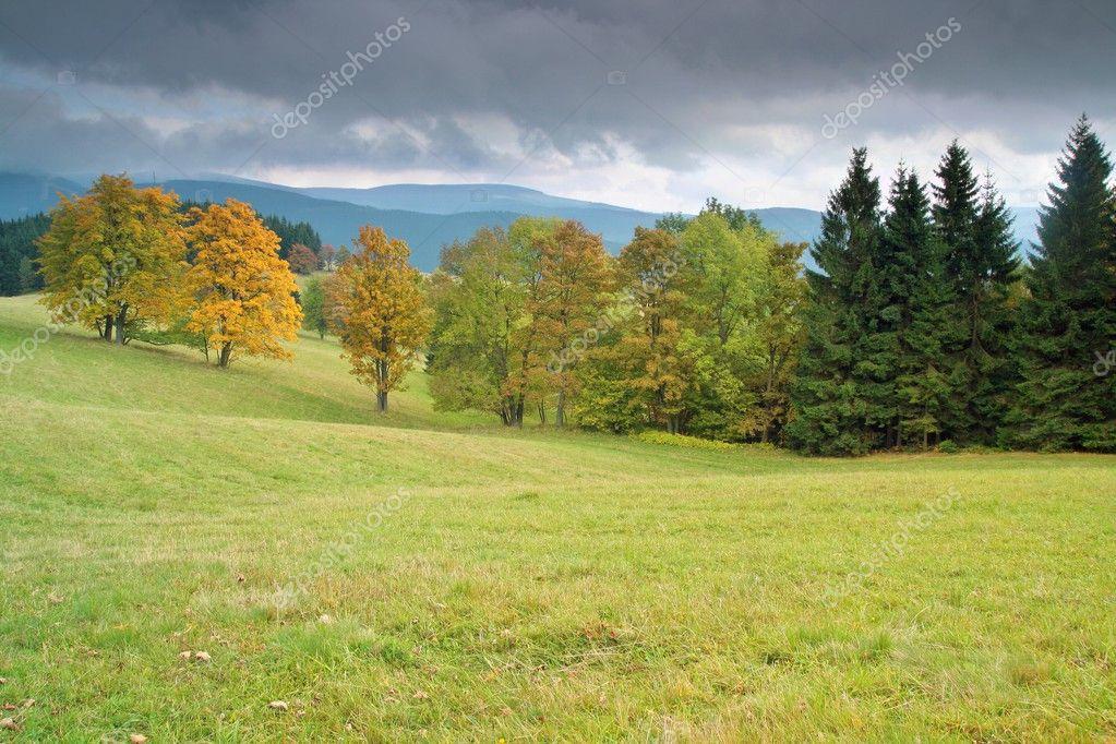Tree and landscape on autumn