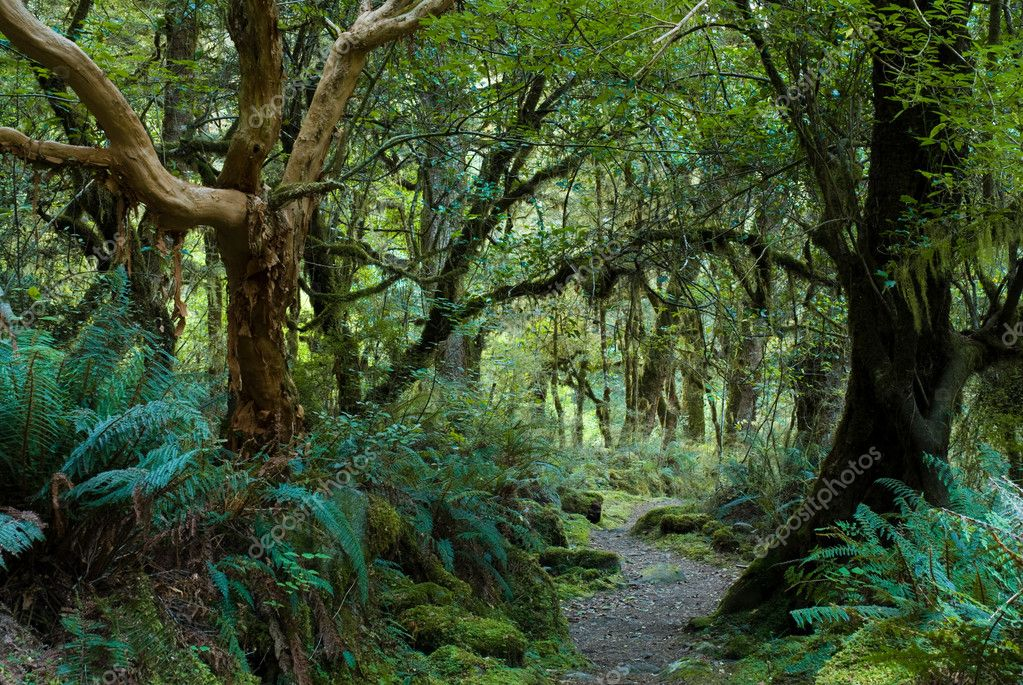 Primeval Forest Stock Photo 169 Peterwey 2309085