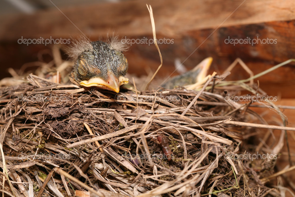 Baby bird resting in nest