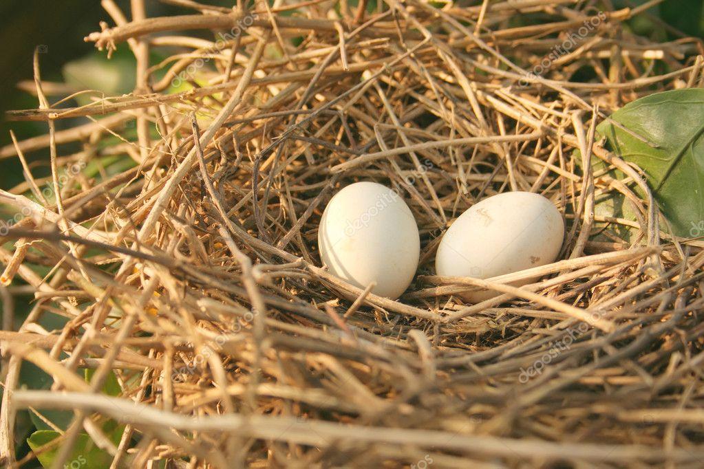 Isolated Bird's Nest