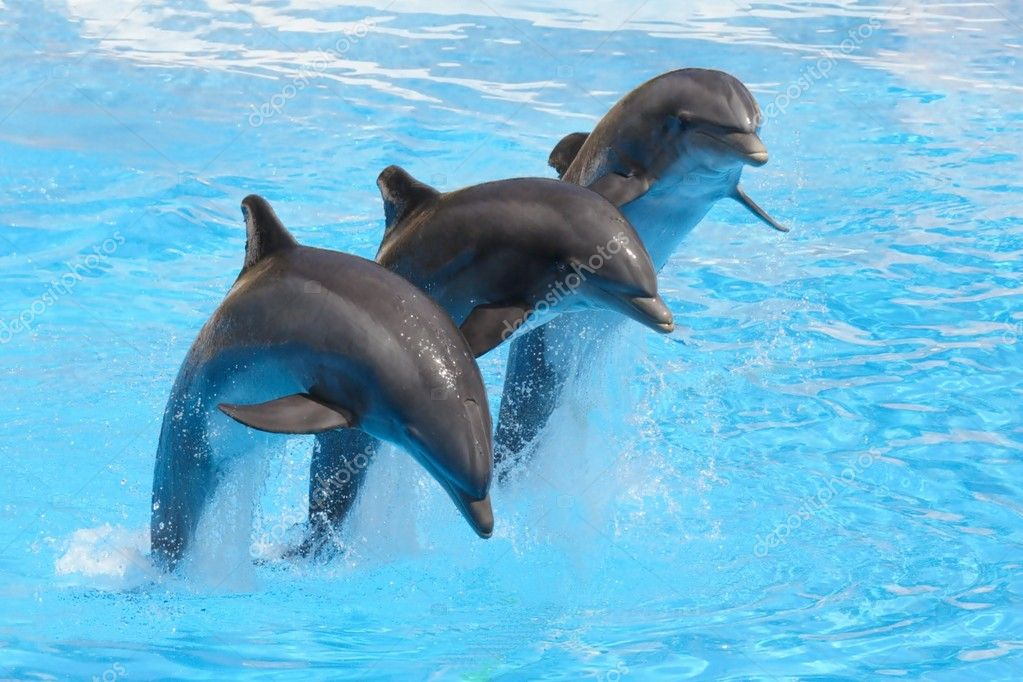 Bottlenose Dolphins performing in a show
