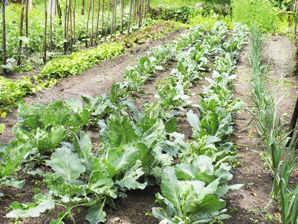 Pictures of a vegetable garden - An Organic Vegetable Garden In A Rural Setting Photo By Malino