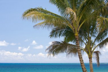 Palm Trees and Tropical Waters