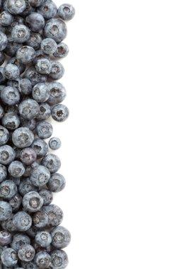 Fresh Blueberries Border Isolated