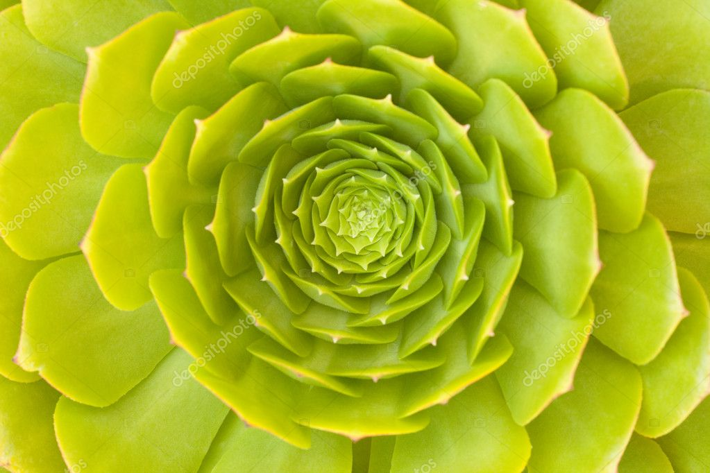 Beautiful Green Succulent Cactus Blossom