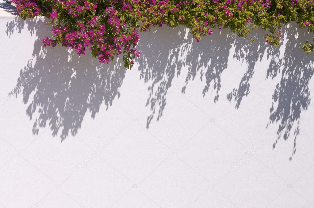 Bougainvilleas Casting Shadow