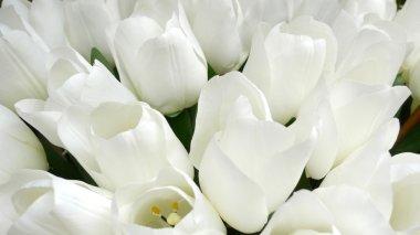 Fake white tulips