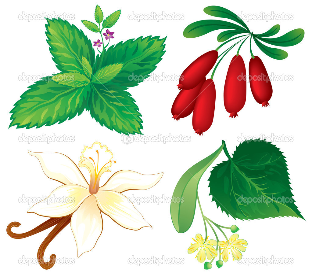 Set of aromatic plants