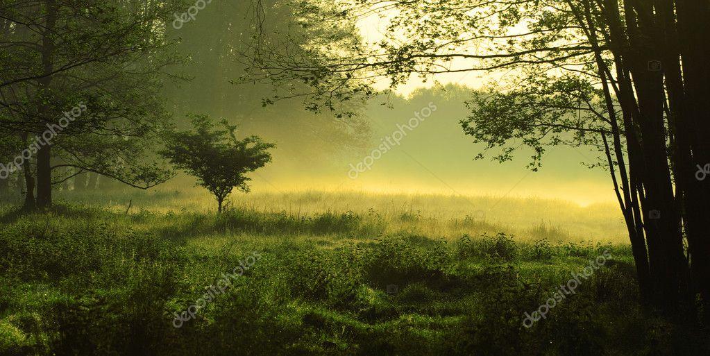 Mystic foggy landscape
