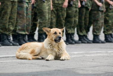 Military dog on the ground