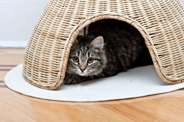Young adorable cute cat is hiding