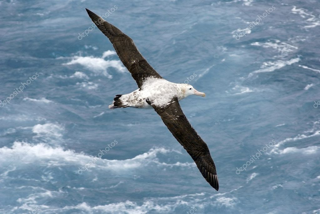 albatross anchor proposal Albatross anchor must update us safety and environmental standards immediately according to the us environmental protection agency (2011), the compliance and enforcement division releases the average annual fines collected by the epa throughout the year.
