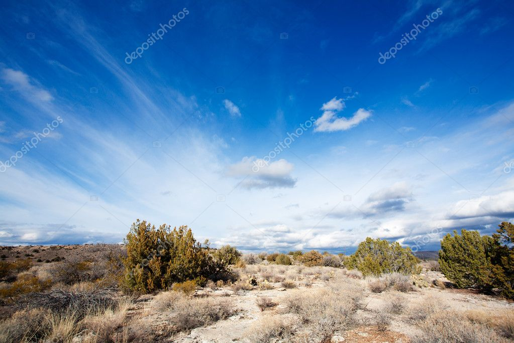 Arizona high desert