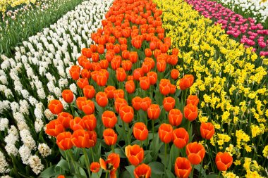 A field of colorful flowers