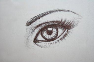 Hand drawn large female eye and eyebrow