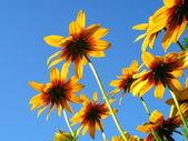 a virágok részlete