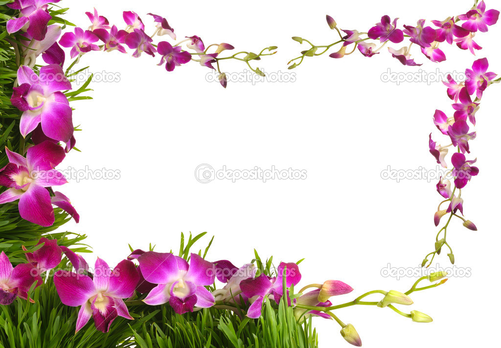 Floral frame with pink orchid — Stock Photo © natlit #2429162