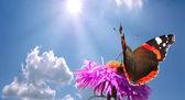 motýl na květu proti obloze