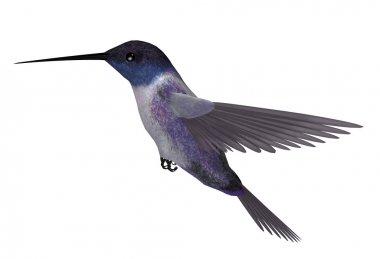 Blue Purple Hummingbird