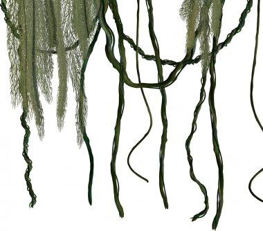Jungle Vines