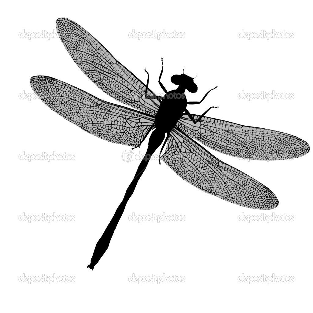 Dragonfly Silhouette Stock Photo C Kathygold 2638762 On this page presented 35+ dragonfly silhouette photos and images free for download and editing. dragonfly silhouette stock photo c kathygold 2638762