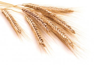Wheat ears on a white background
