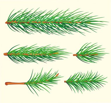 Pine Branches. Vector brush