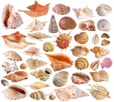 Set of seashell collection