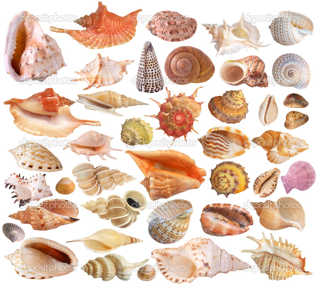Set of seashell collection