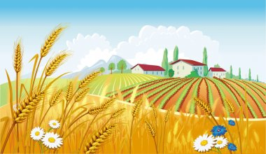 Rural landscape with fields stock vector