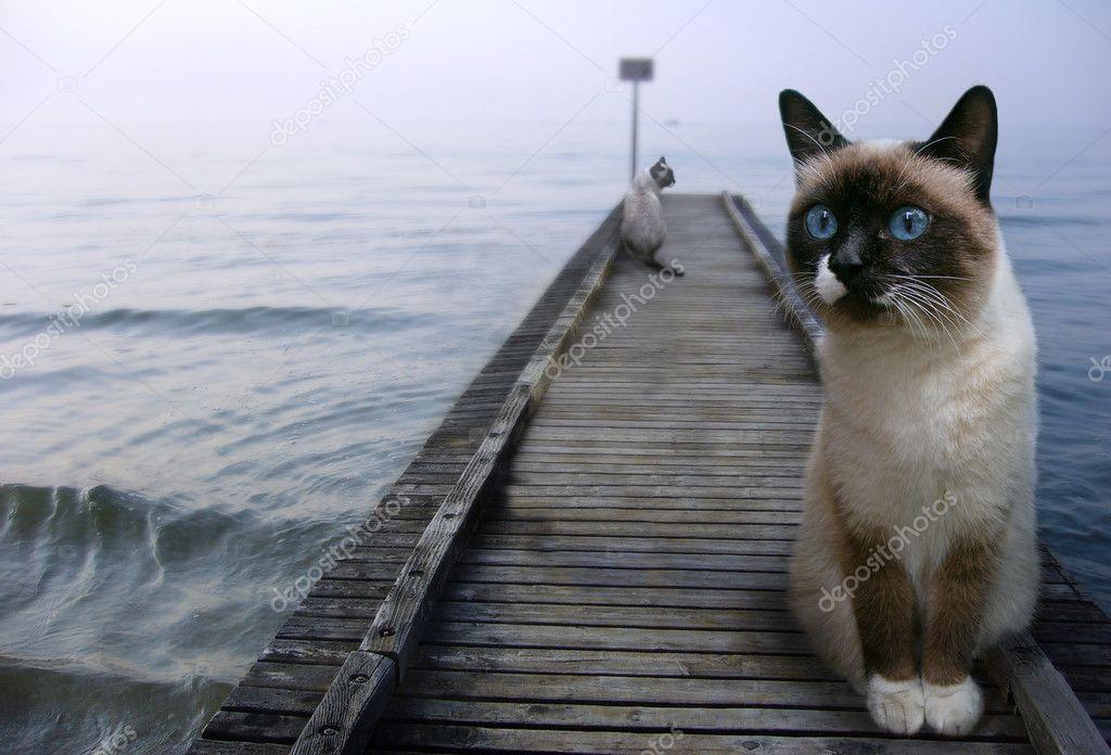 Cats sentinels
