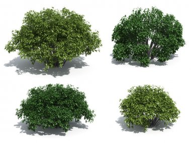Bushes isolated on white background stock vector