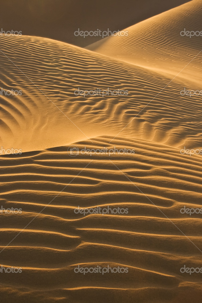 Desert dunes in evening sun