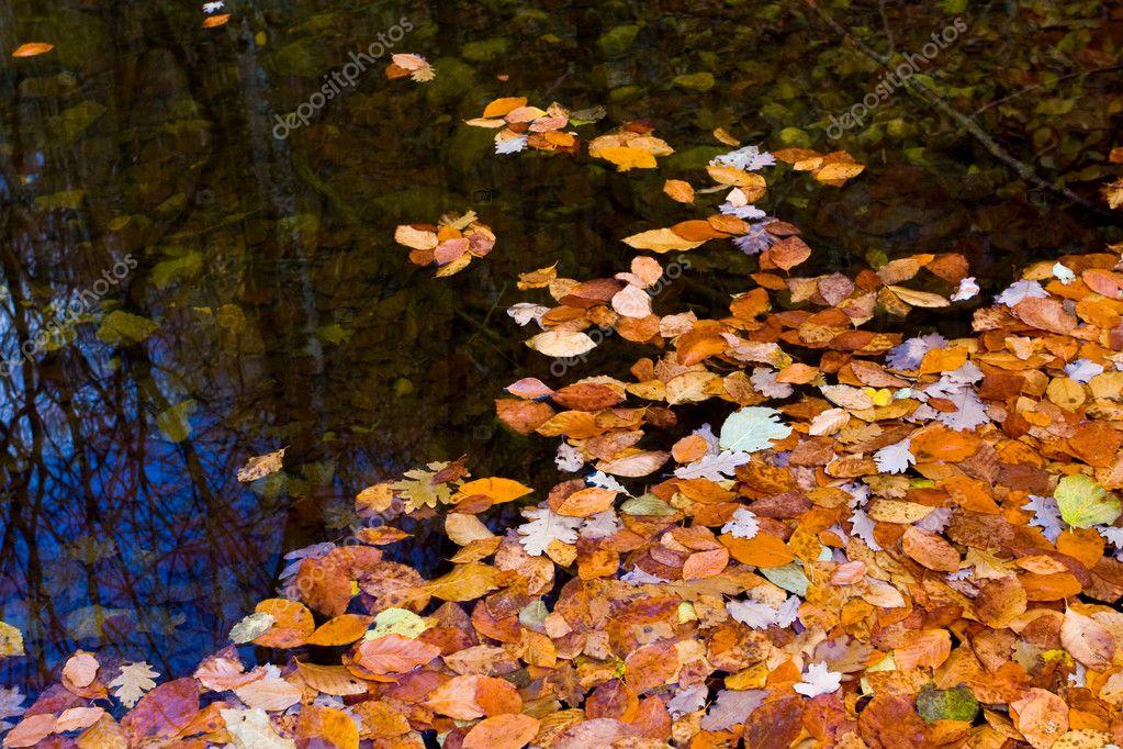 Stock Photo © Pklimenko #2623717