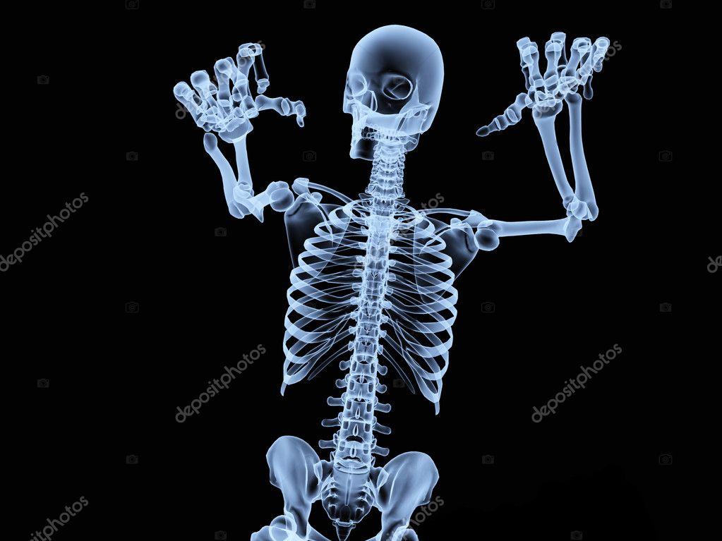 Xray Skeleton — Stock Photo © harveysart #2574663