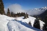 sentiero in montagna invernale