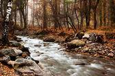 Áramlat az őszi erdőben