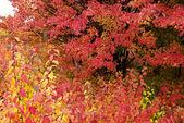 Fotografie Colors of autumn forest