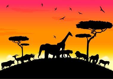 Safari africa sunset at high hill