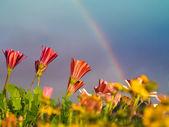 virágok és a szivárvány