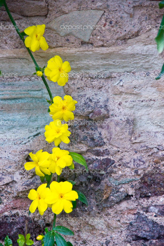 Yellow Flowers on a Vine